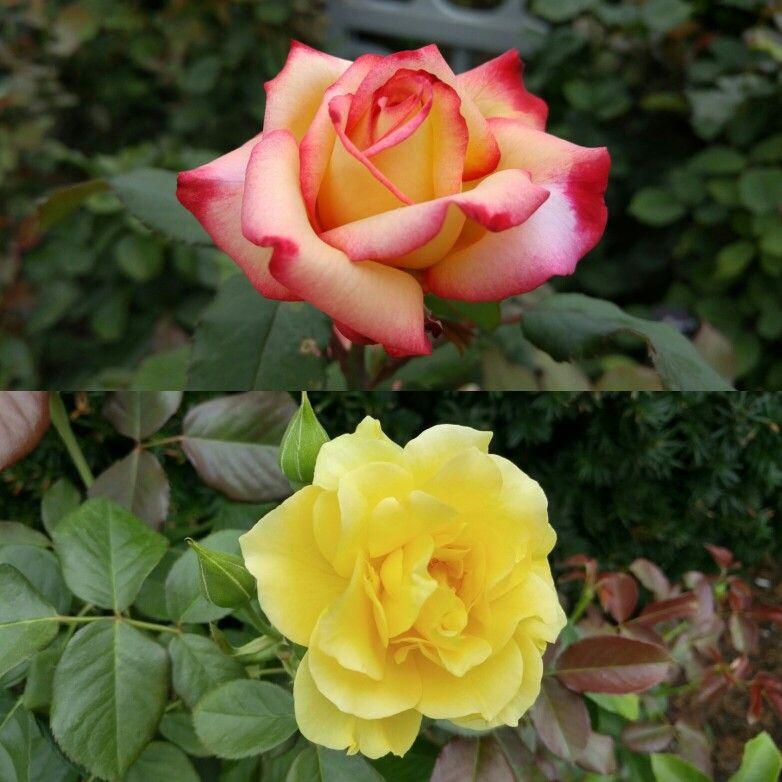 #Flower #Garden at #Buckingham #Fountain  #Efficient #long #distance #traveler - #CleanMPG