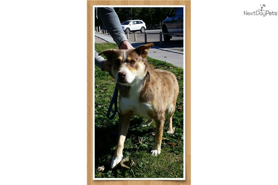 I Am A Cute Catahoula Leopard Dog Looking For A Home On