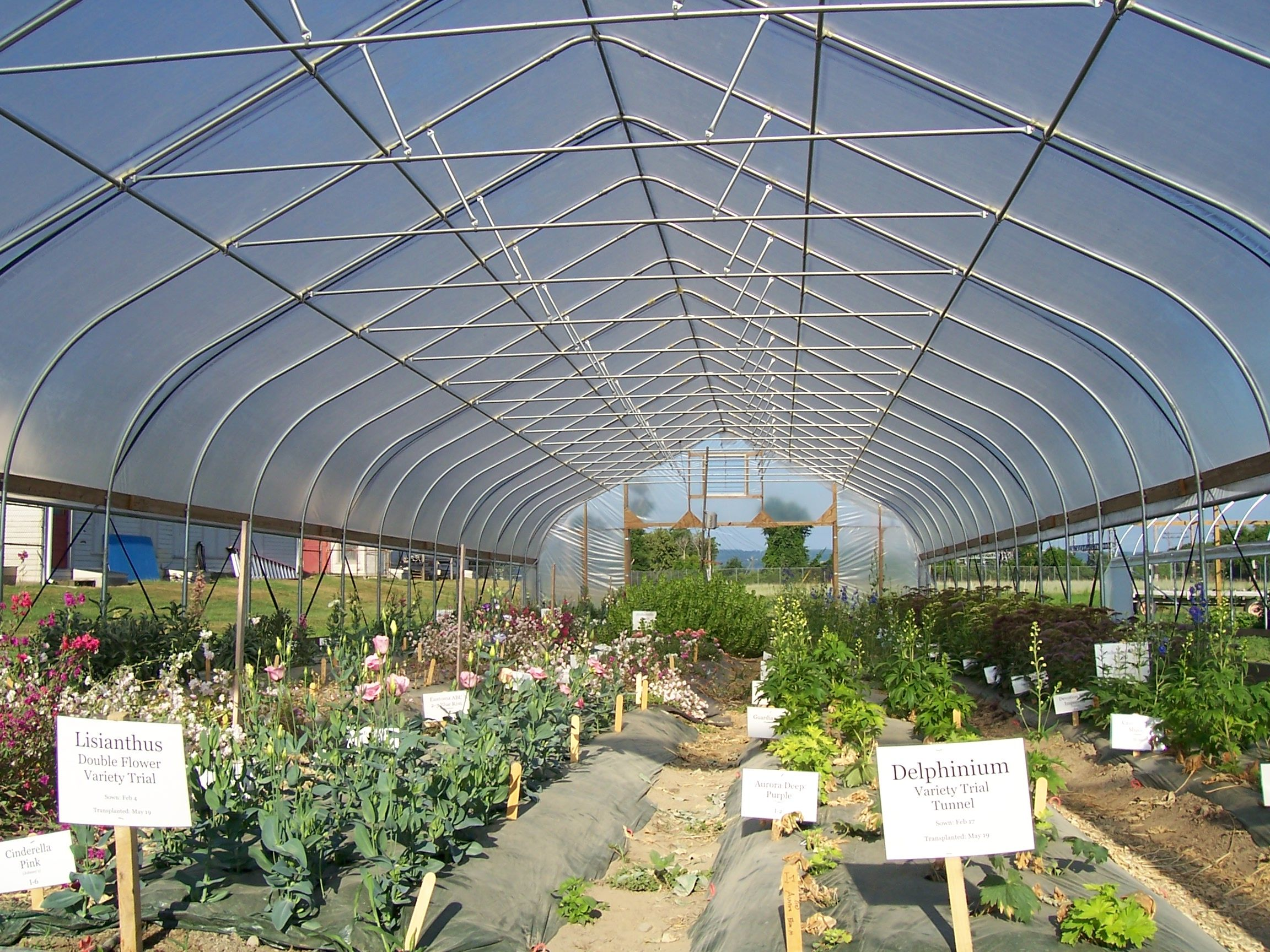 High Tunnel growing at Cornell in a Rimol Greenhouse
