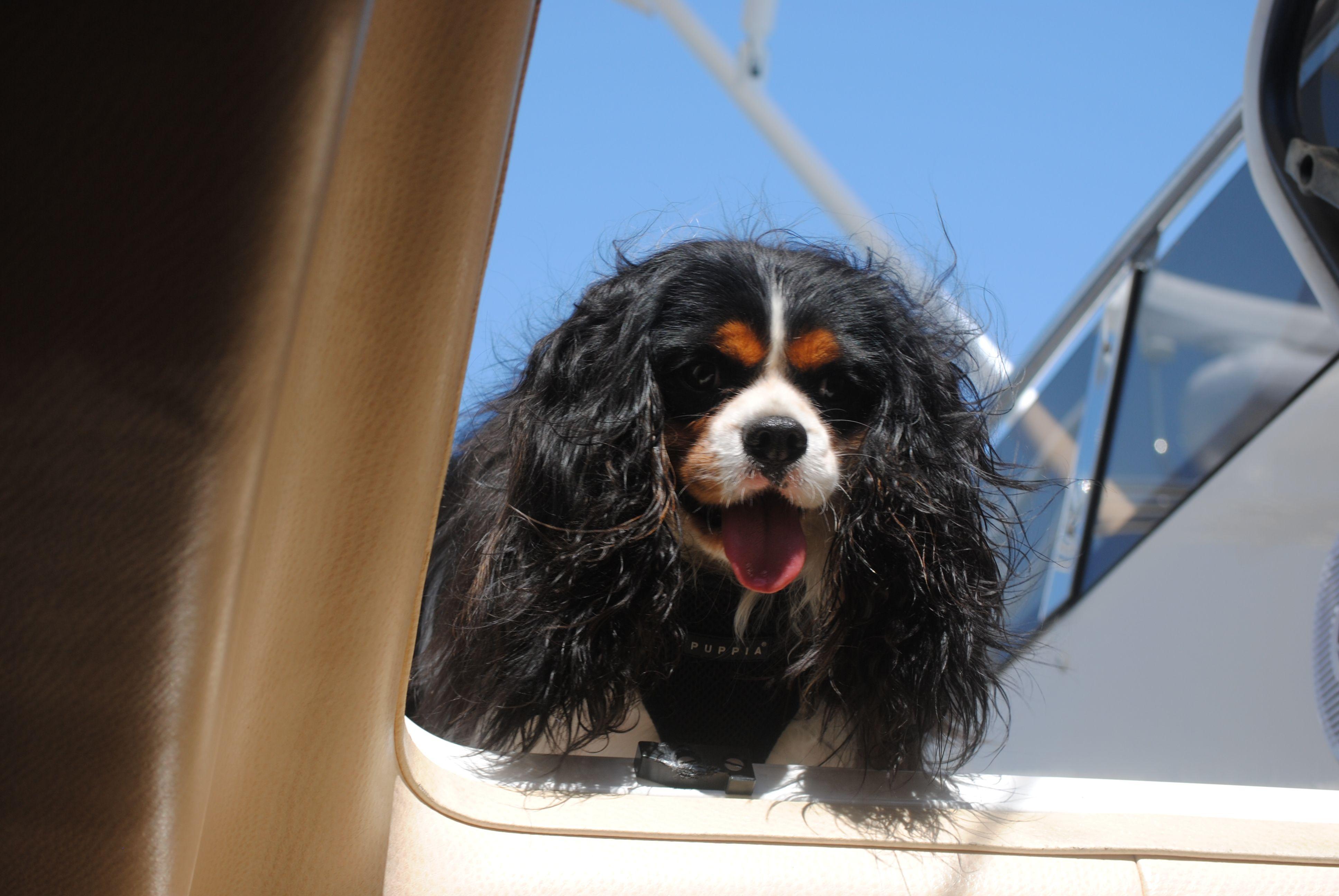 Yachting dog..........YachtWorld Animals beautiful
