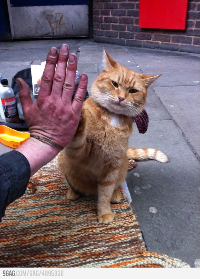 High Five! Street cat bob, Cats, Crazy cats