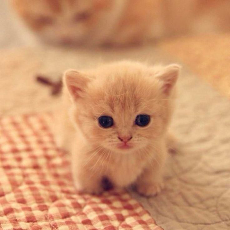 Can I Come With You Baby Cats Kittens Cutest Cute Baby Animals