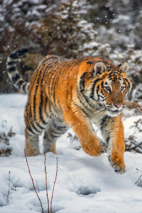 the chase is on animals fitness motivation fitness