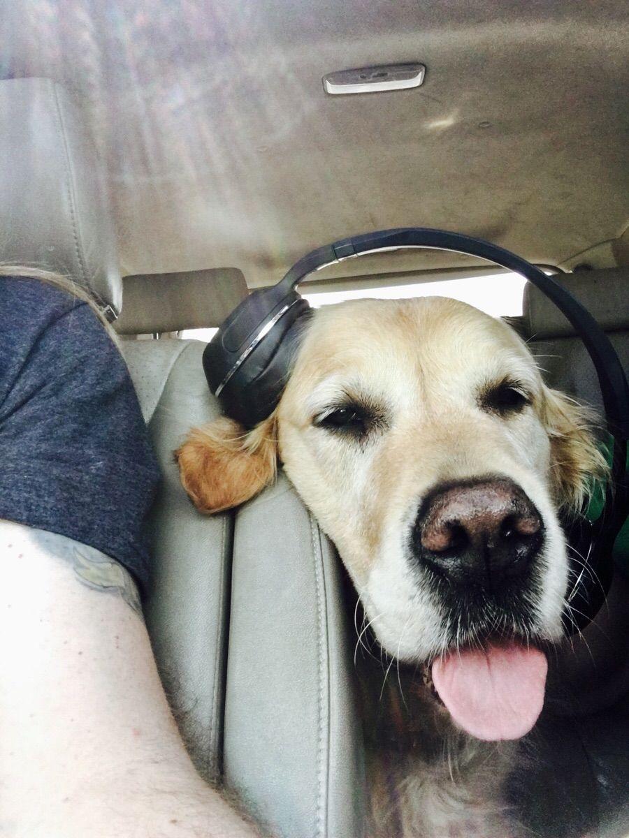 My derpy DJ dog. (X-post from /r/funny) http://ift.tt/2oLsz8e