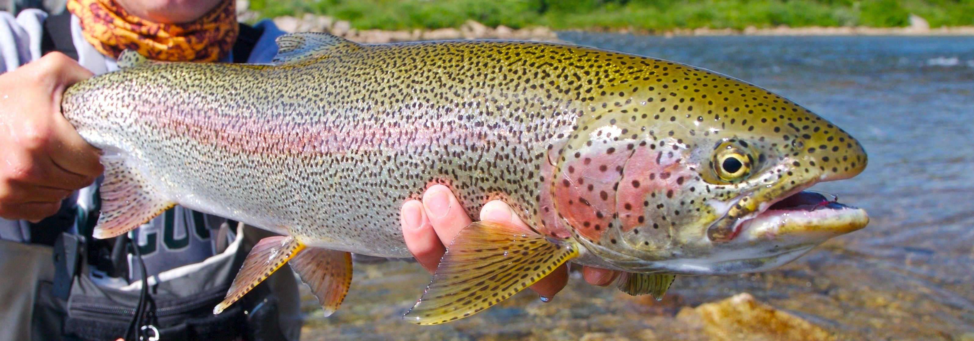 15+ Different Types of Trout Fish with Pictures