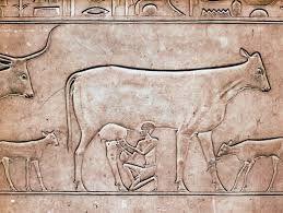 Картинки по запросу древние люди | Egypt museum, Pyramids ...