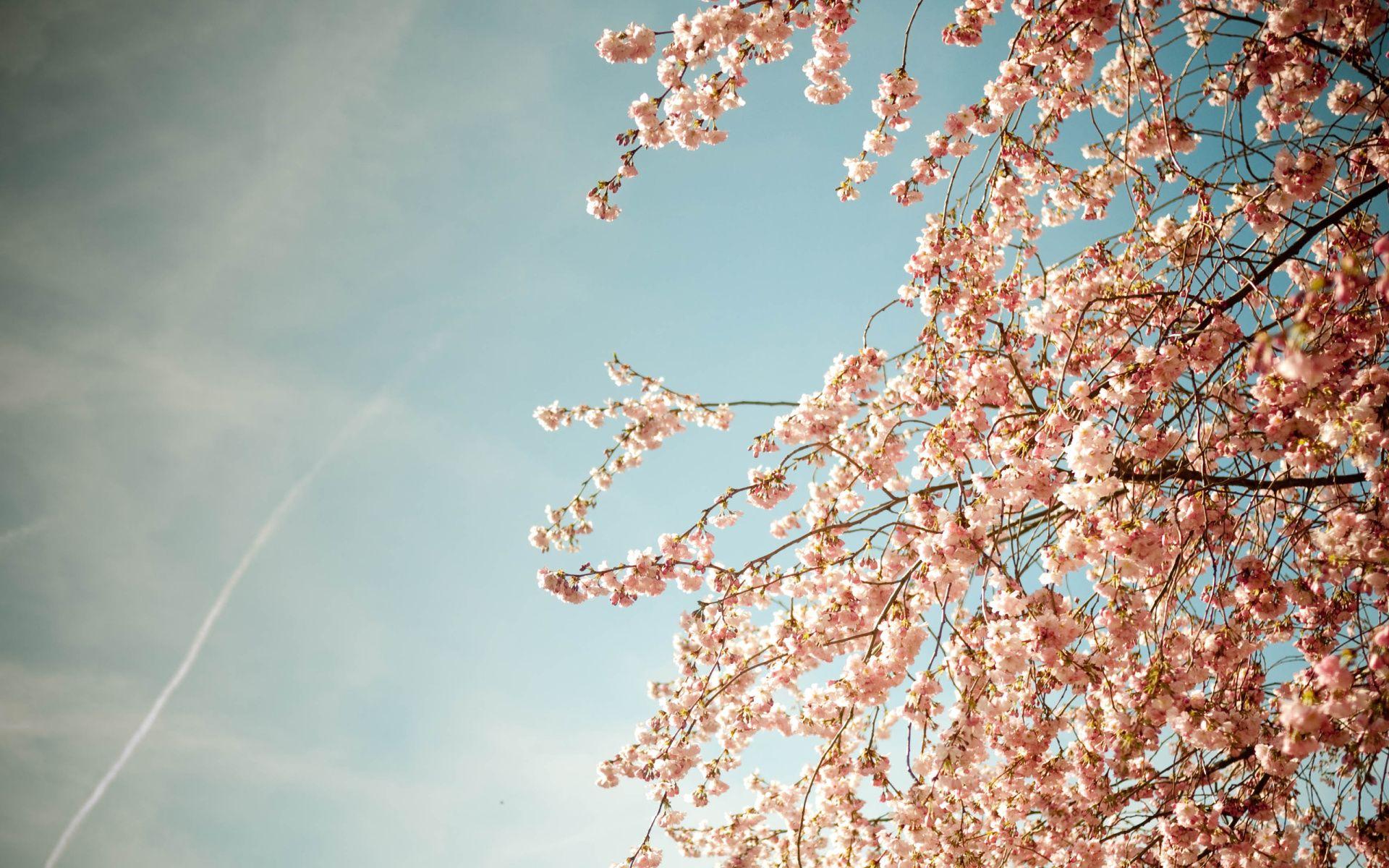 Springtime Wallpapers