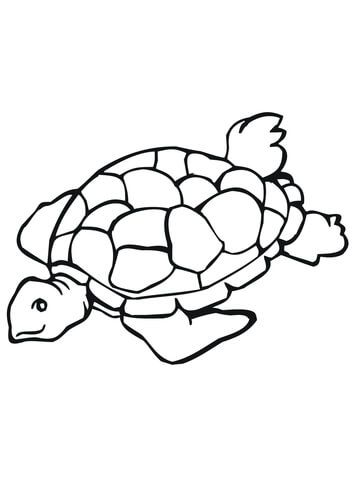 Tartaruga Marinha Pagina Para Colorir Animais Marinhos