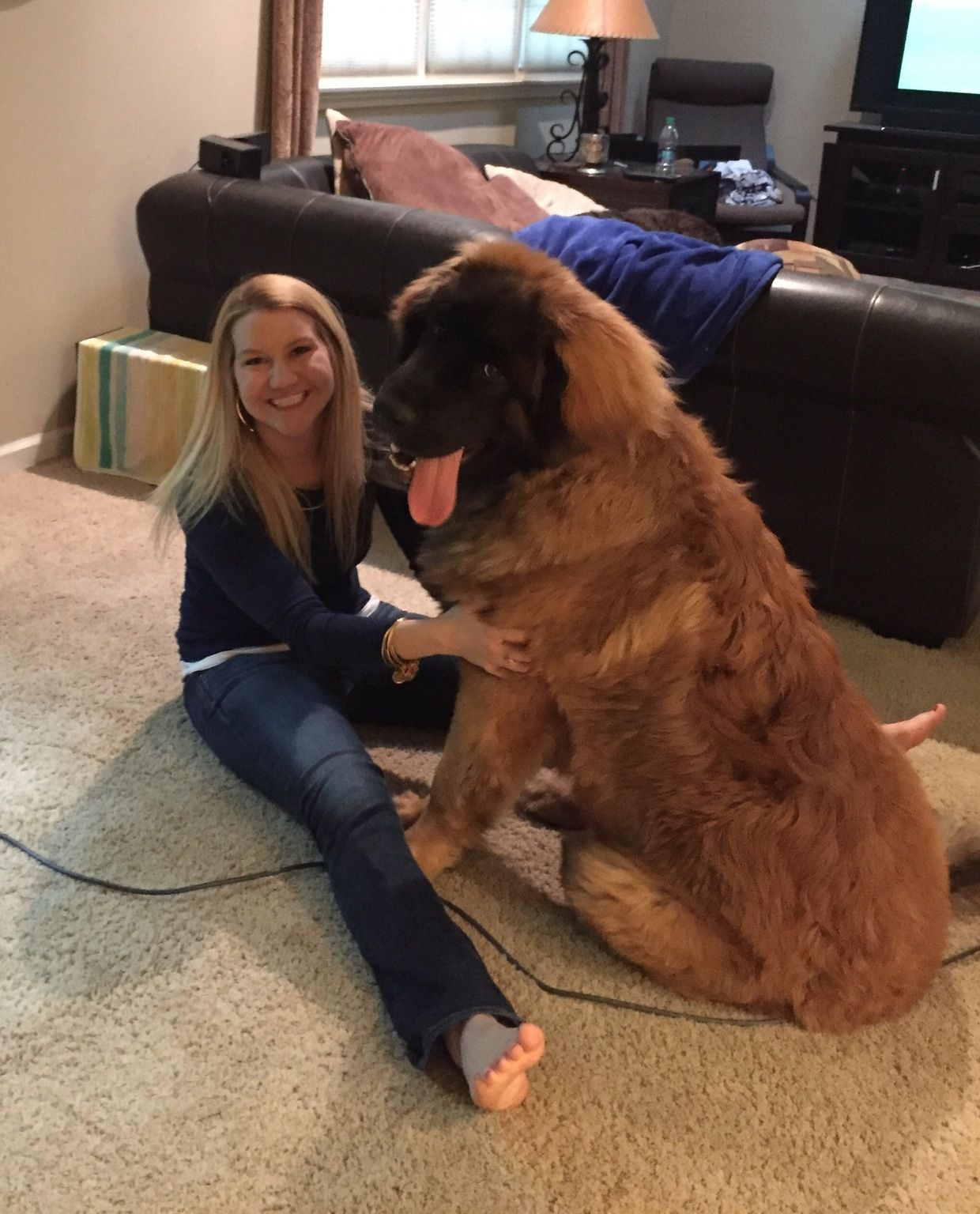 Leonberger puppy, 10 months old! Huge dogs, Leonburger