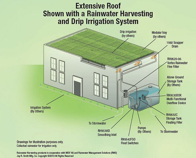 Extensive Roof With A Rainwater Harvesting And Drip Irrigation