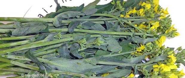 Raps Gemüse