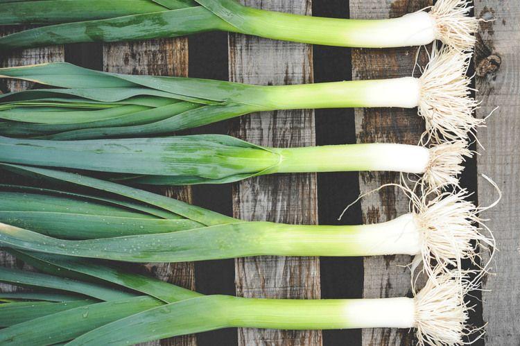 How to Plant Onions Planting onions, Urban farming