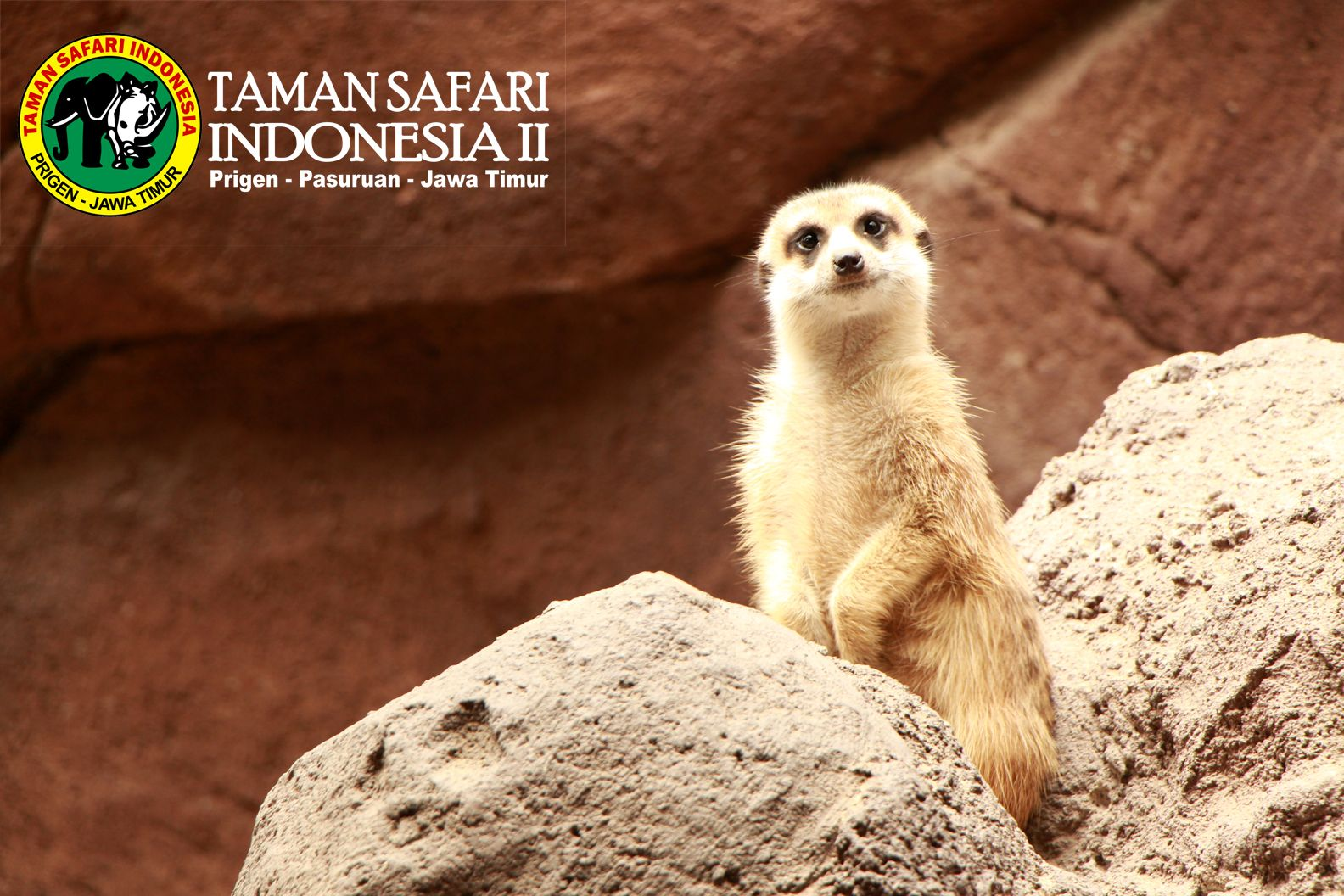 Salah Satu Satwa Yanga Ada Di Taman Safari Indonesia II Prigen