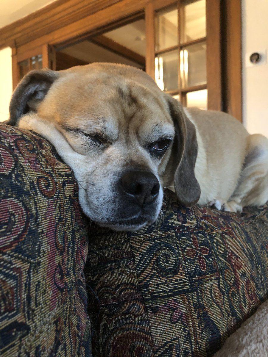 Chasten Buttigieg On Twitter Grand Dog National Pet Day Pet Day