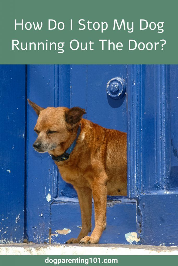 Does Your Dog Run Out The Door Every Chance He Gets You May Have