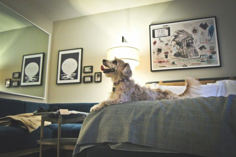 Wrigley Takes On Thompson Chicago Thompson Hotels Upper Stories Blogthompson Hotels Upper Stories Blog Thompson Chicago Pet Friendly Thompson