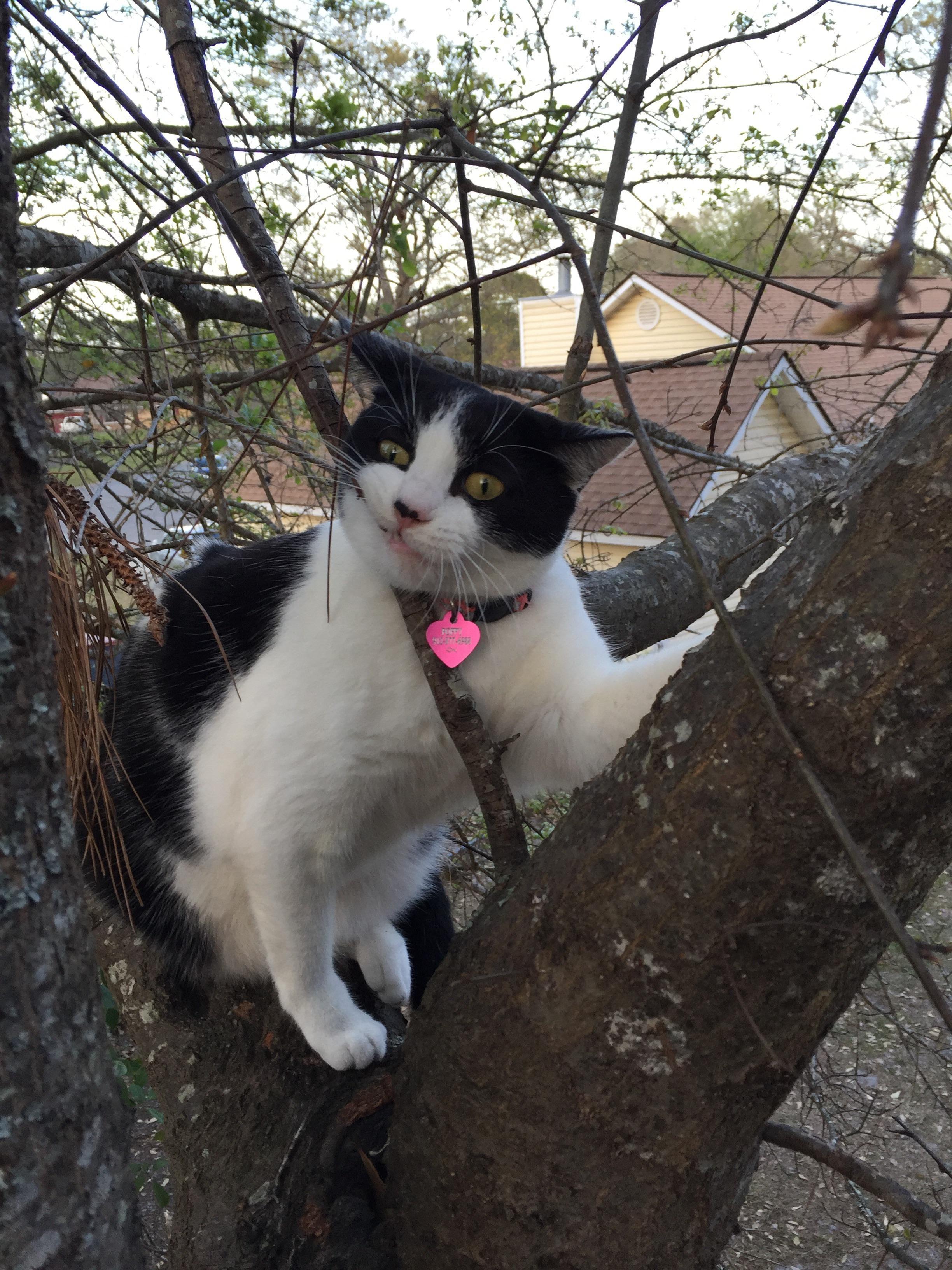 I felis if my catus has no idea how to cat... http//ift