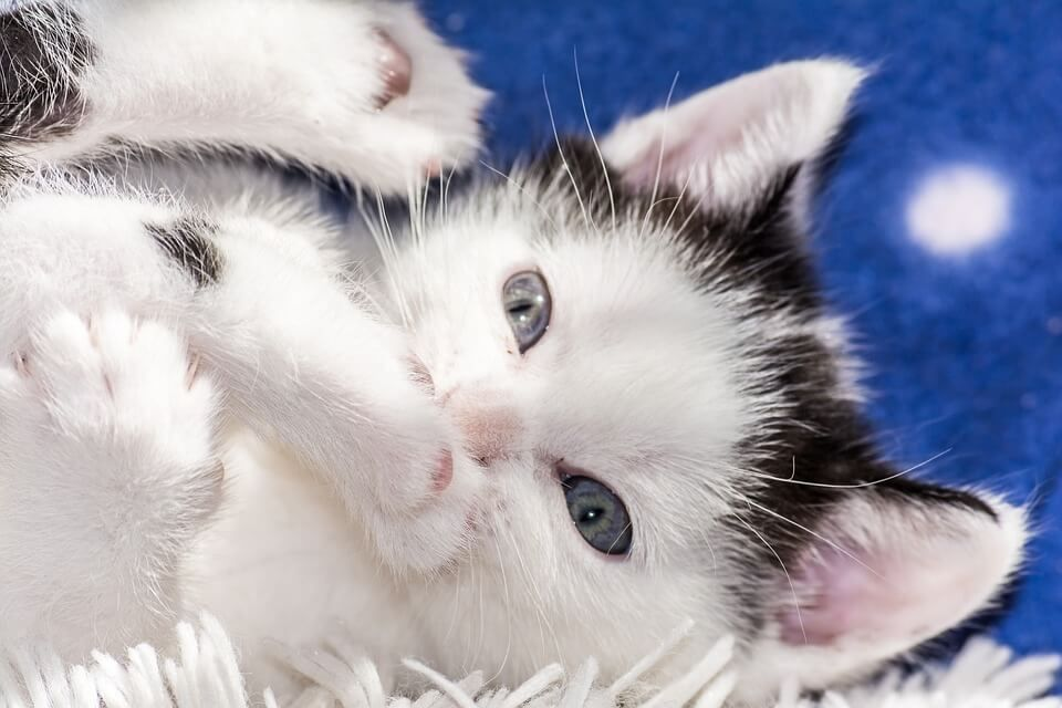 30 Beautiful Cute Cats Hd Wallpapers Free Download Baby Cats Cats And Kittens Free Cats