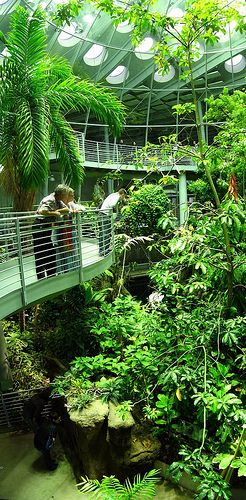 California Academy of Sciences. Been trying to get into this terrarium for a couple weeks :/
