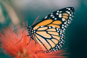 Butterfly S Breakfast 2 Ein Foto Von Dioxin Mit Bildern Tiere Fotos Wilde Tiere