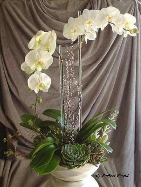 pin by sharon joanna on i love flowers pinterest orchid floral arrangement and plants. Black Bedroom Furniture Sets. Home Design Ideas