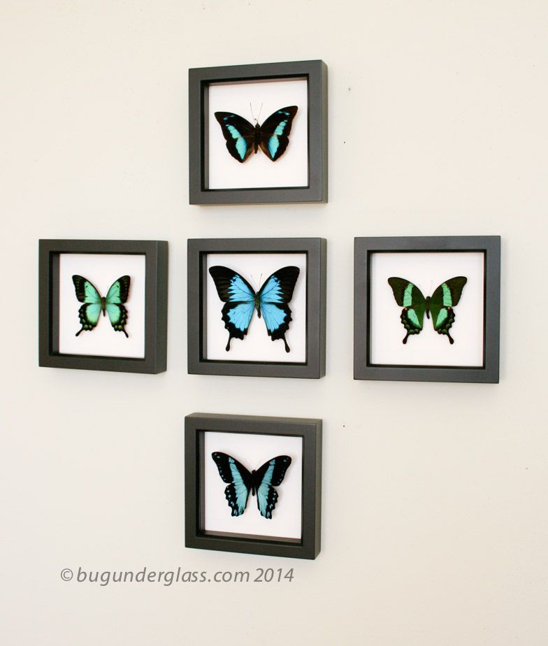 Insect Gallery in 2018 | Real Framed Butterflies | Pinterest | Frame ...