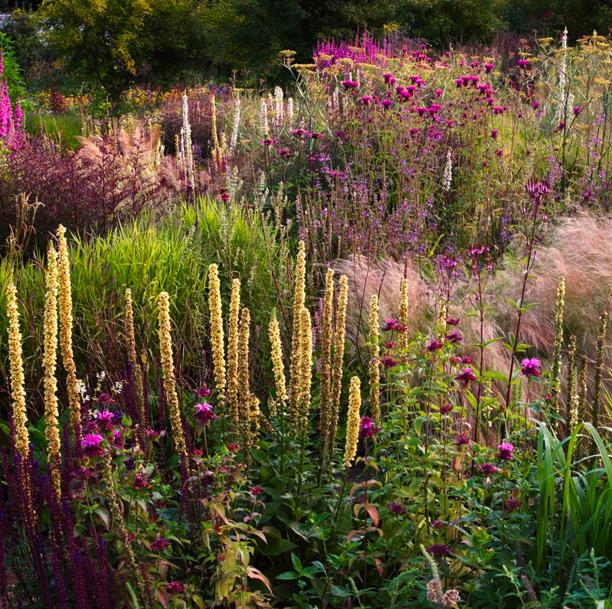 Carex Garden Design By Carolyn Mullet Garden Design Garden Plant Design