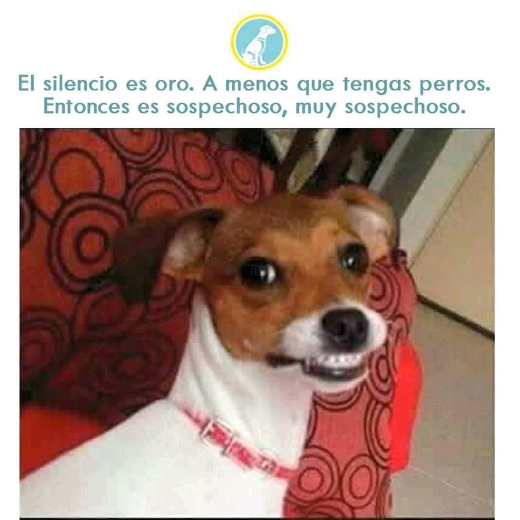 Solo Los Duenos De Mascota Entenderan Mascota Perro Dog Animales Mejoramigo Amigo Bff Amor Love Amoamimascota Ilovemydog Adopt Animals Memes Dogs