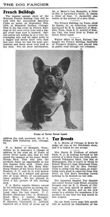 French Bulldogs Cont The Dog Fancier Vol 25 1916 French