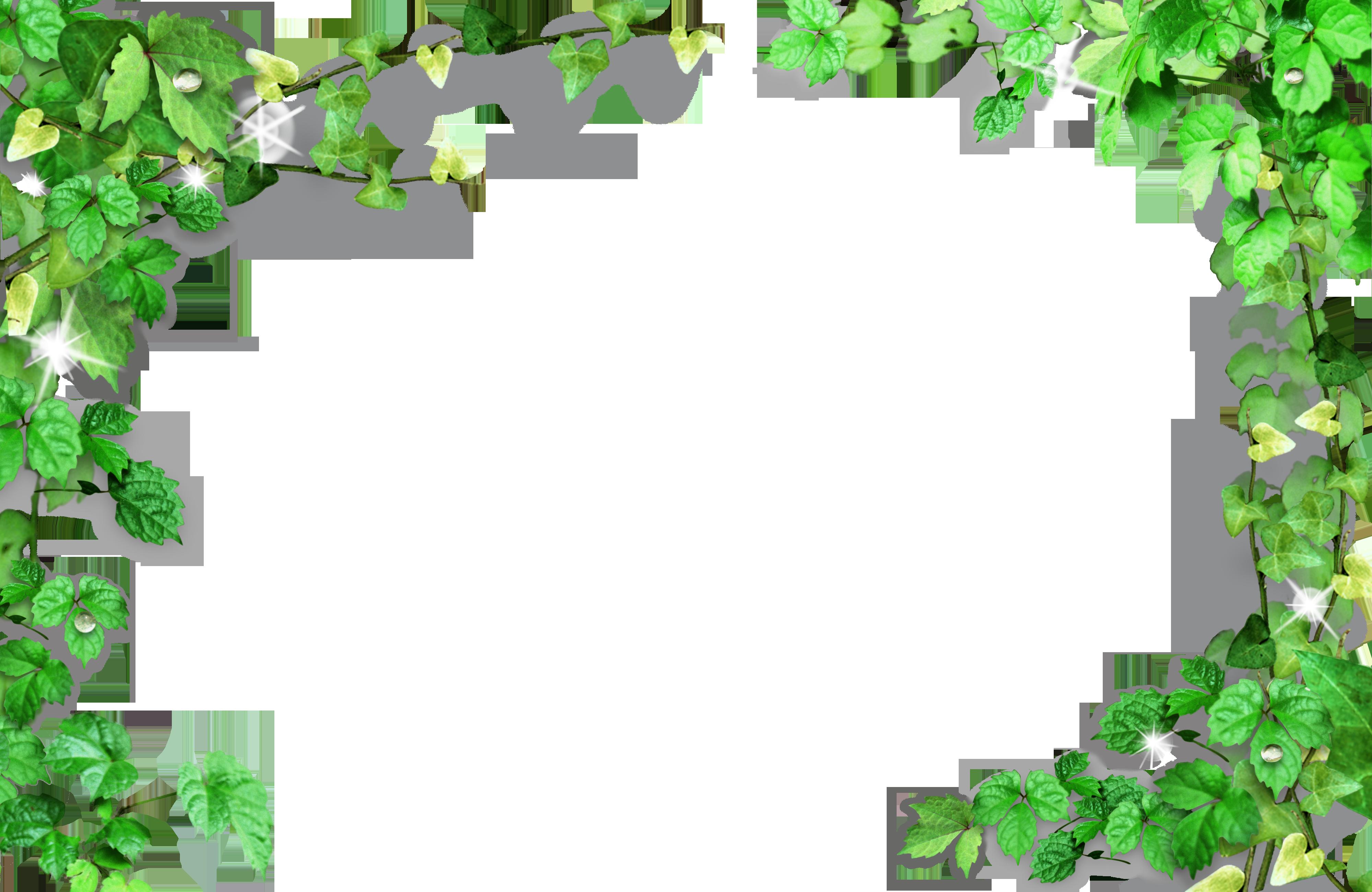 Green Leaves Frame Framed Plants Butterfly Wallpaper Iphone Flower Border
