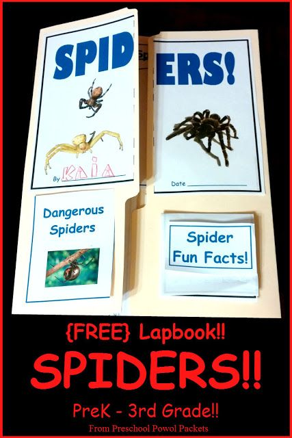 {FREE} Spider Lap Book | Preschool Powol Packets