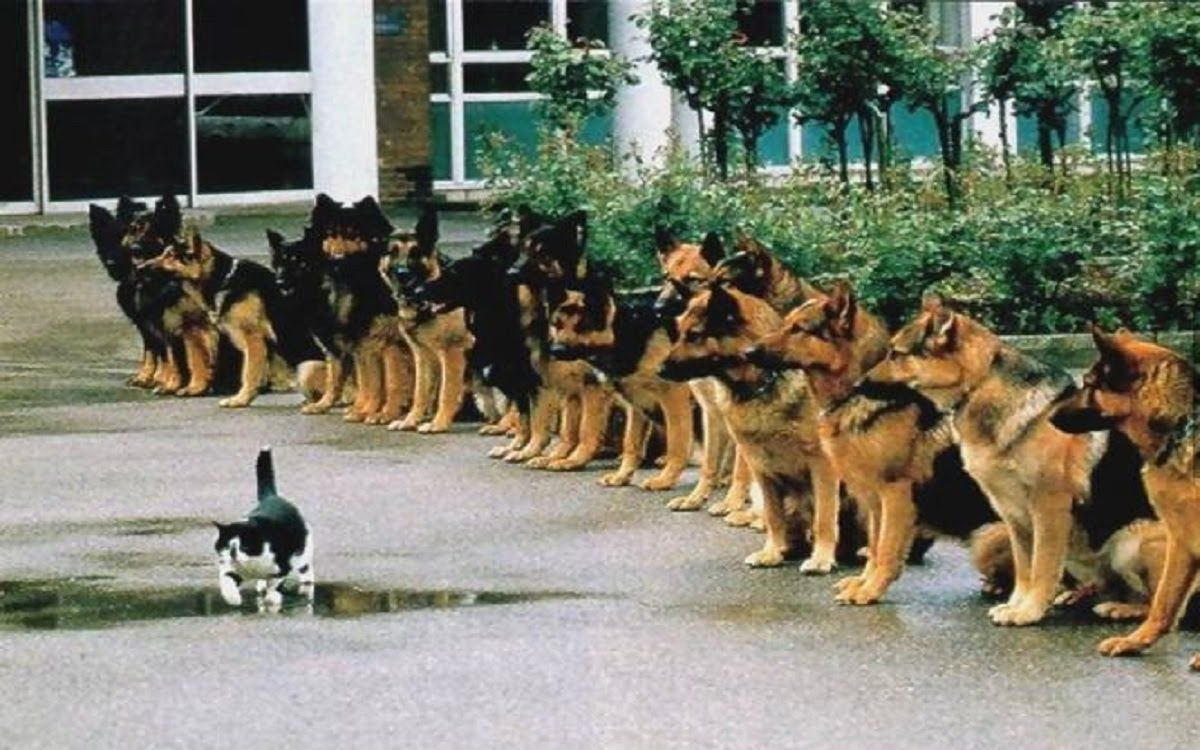 Best Trained Disciplined Dogs 2 Of Dogs And Cats And Others