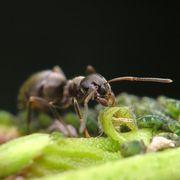 46e3ca46f943451f791829ff02e0a88c - How To Get Rid Of Ants In Vegetable Garden Naturally