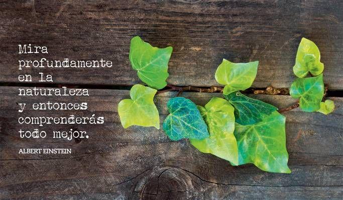 Hojas Verdes Sobre Madera Frases Naturaleza Frases Y