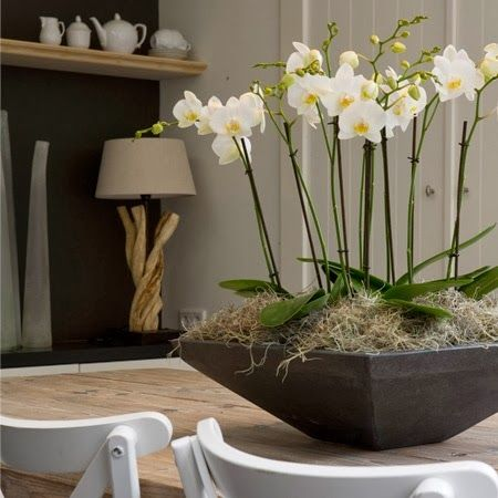 orquidea-decoracao+(12).jpg (450×450)