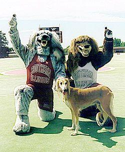 The Southern Illinois Salukis Sports Mascots Pinterest