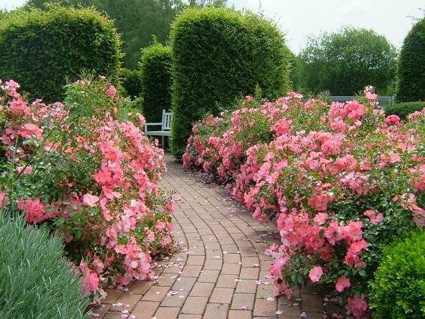 Flower Carpet Coral Along A Garden Pathway The Original Eco Rose Flower Carpet Needs No Fancy Pruning Or Chemicals Landscaping With Rocks Easy Garden Plants