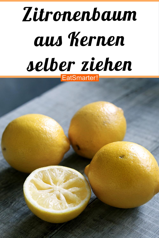 Zitronenbaum aus Zitronenkernen selber ziehen #gemüsepflanzen