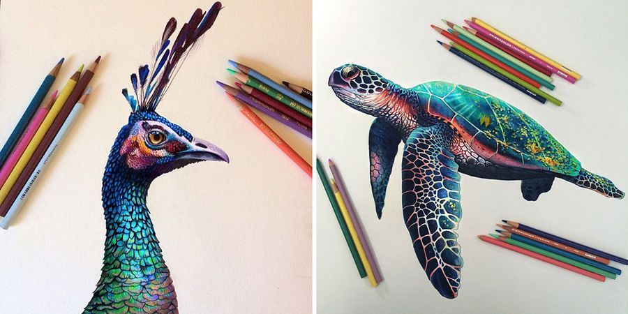HyperRealistic Pencil Drawings Bursting With Color By Morgan - Artist creates amazing hyper realistic 3d drawings