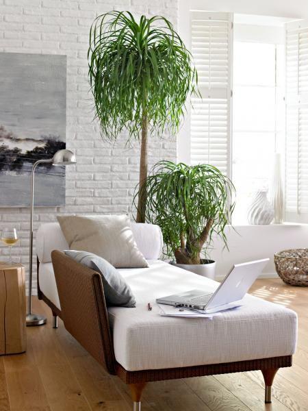 dekorative pflanzen fürs wohnzimmer standort pic oder eeafccdcbc