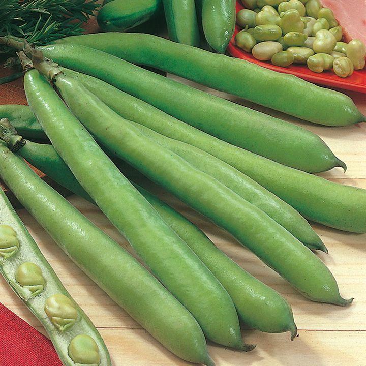 Bean Broad Bean Seeds Aquadulce Claudia Beans Fava 400 x 300