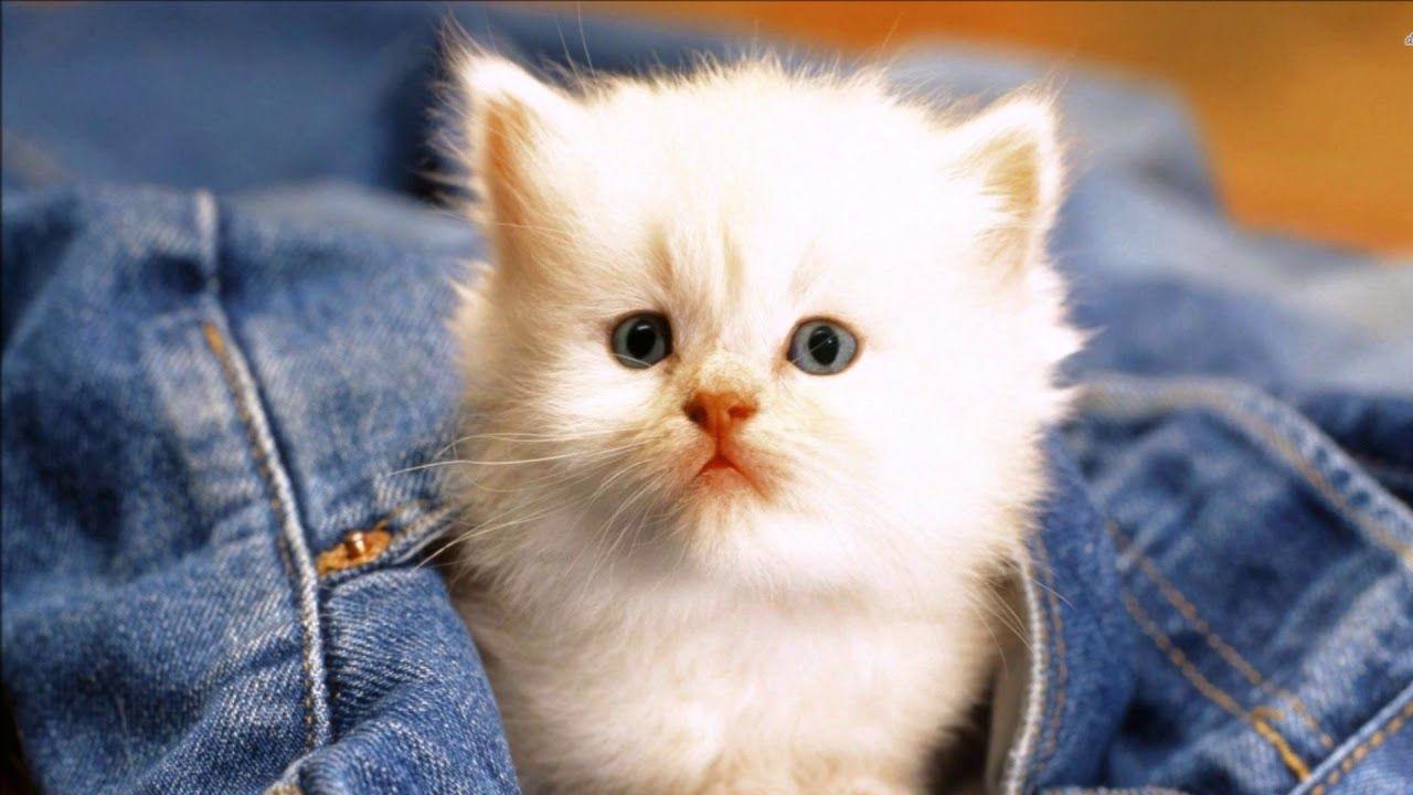 Candan Ercetin Kedi Ozledi Bahane Funny Cat Wallpaper Cats Cats And Kittens