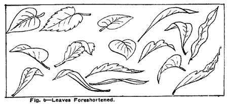 How To Draw Flowers With Leaves Flower Drawing Tutorials Flower Drawing Leaf Drawing