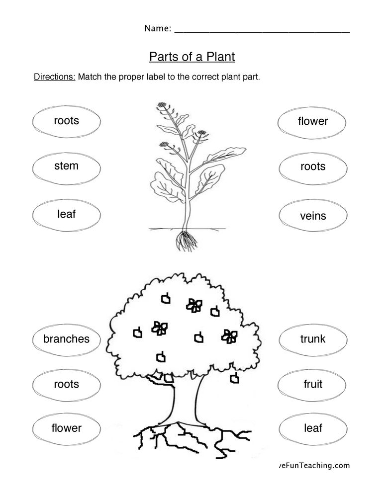 plant cycle worksheet