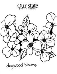 Dogwood Blooms North Carolina State Symbols Coloring Pages