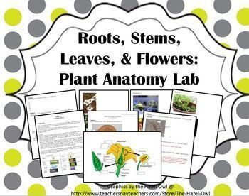 Roots, Stems, Leaves & Flowers: Plant Anatomy Lab- Flower dissection ...
