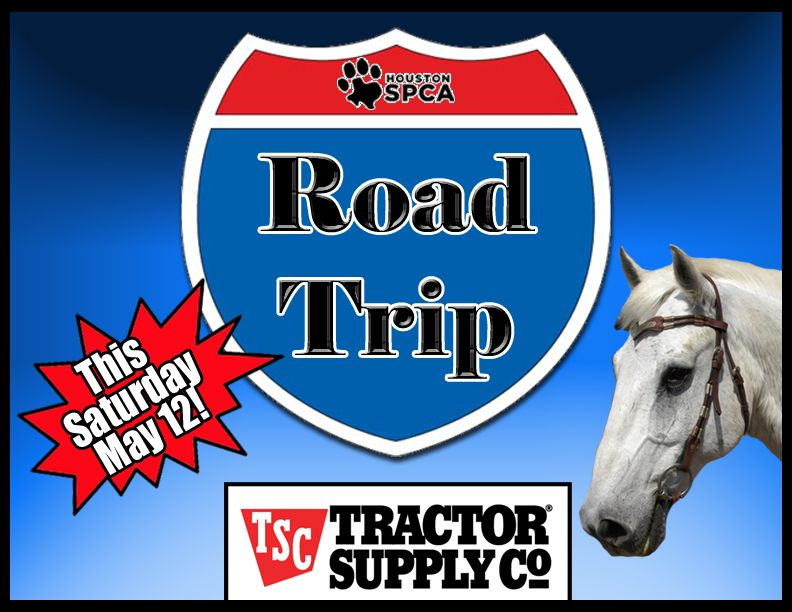"""The Houston SPCA is busy getting our horses and farm animals ready for a road trip, and we want you to come along! Our first mobile horse & farm animal adoption of 2012 will take place on May 12th from 9am to 4pm at the Tractor Supply Company in Huntsville, Texas for their """"Out Here with Animals Event.""""  Learn more at www.houstonspca.org"""