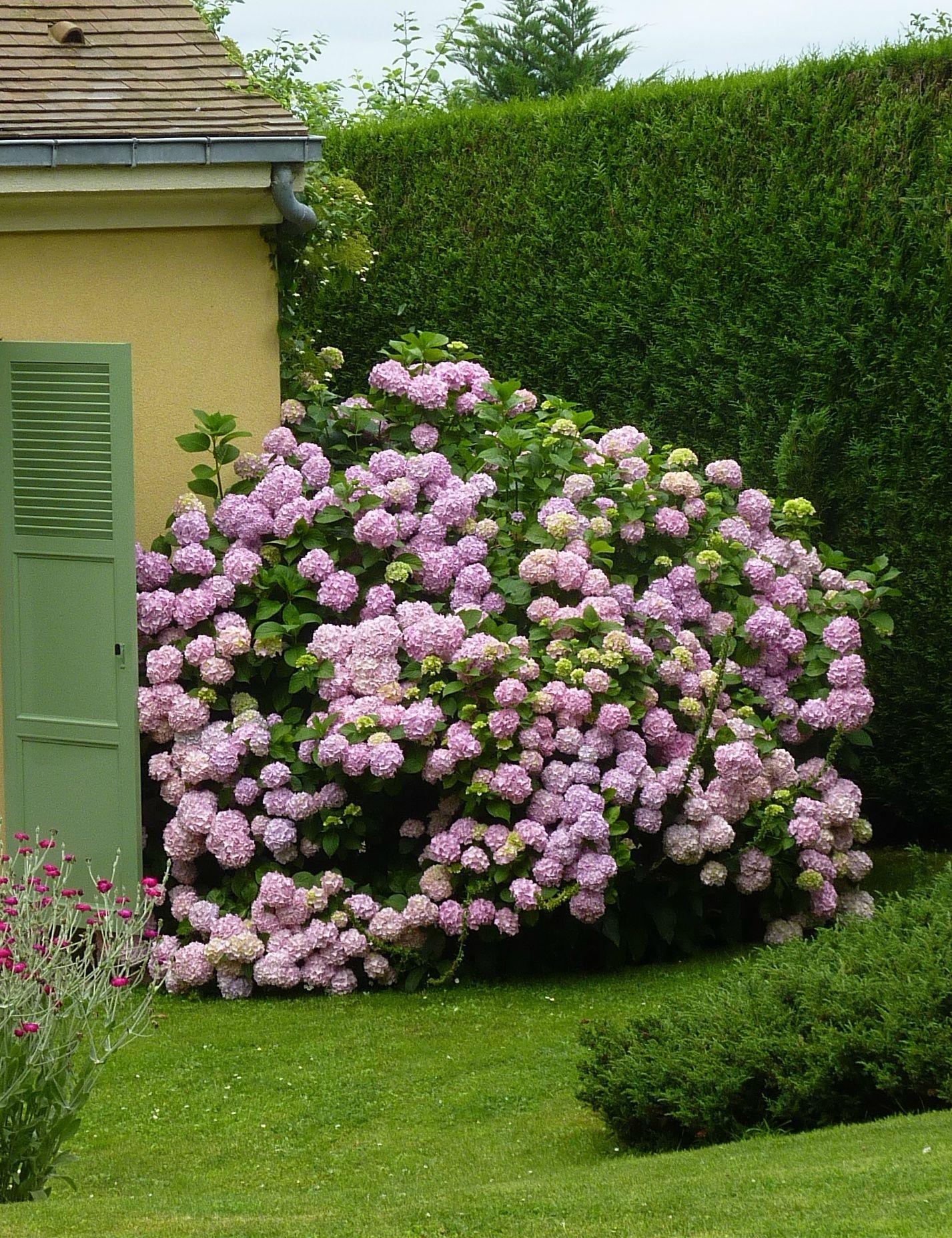hydrangea bouquet rose my love for hydrangeas. Black Bedroom Furniture Sets. Home Design Ideas