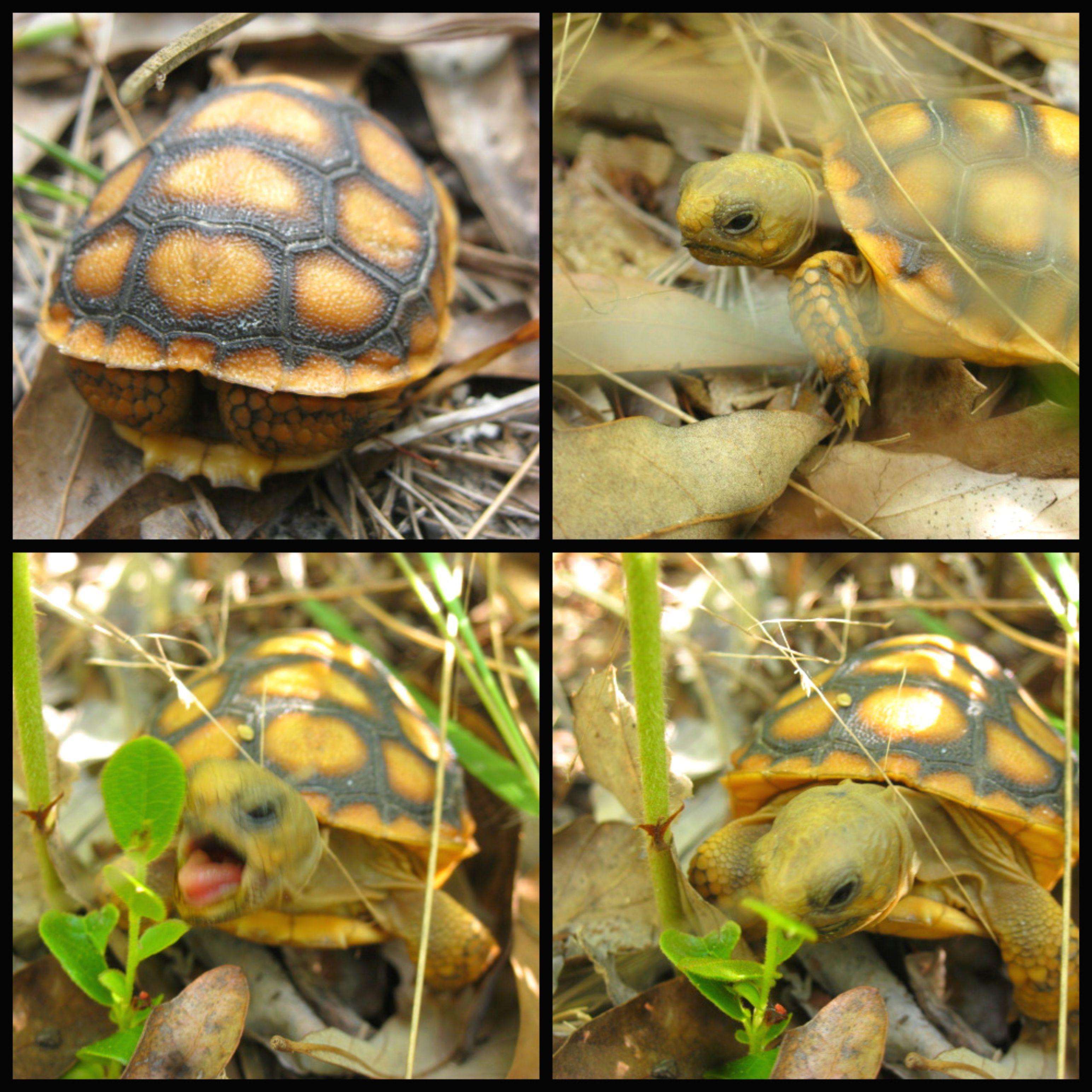 Little turtle by roriebviantart on deviantart i turtles