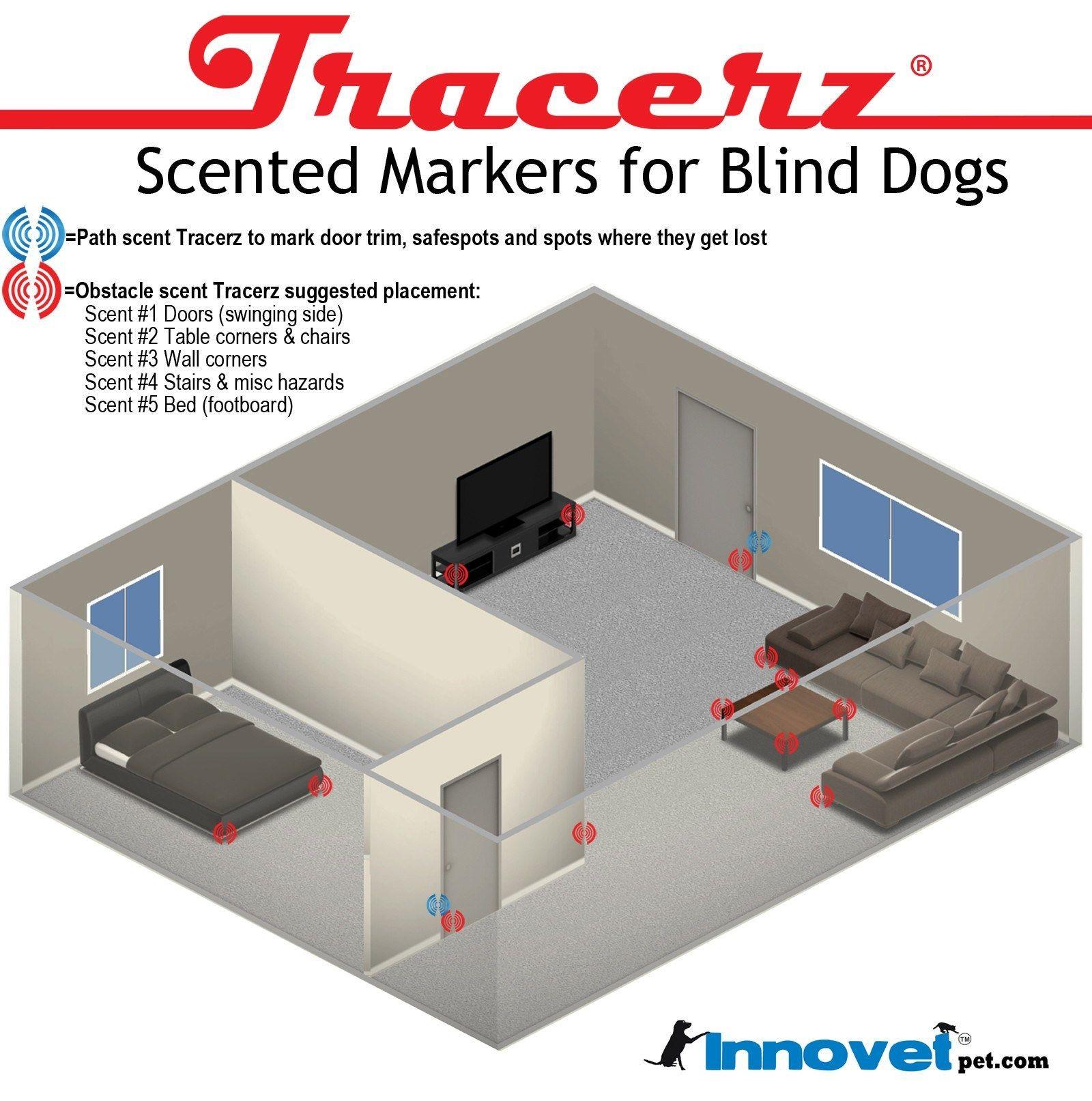 Scent Markers For Blind Dogs Helping Blind Dog Navigate